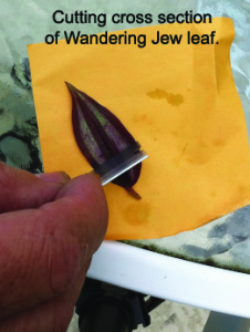 Cutting a Leaf